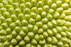 Superfície do Jackfruit Fotos de Stock Royalty Free
