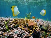 Superfície do recife e da água Fotografia de Stock