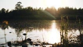 A superfície do rio sujo durante a inundação a superfície inteira da água é contaminada Close-up agrad?vel prospeto vídeos de arquivo