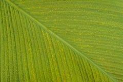 Superfície do verde da folha Fotos de Stock Royalty Free