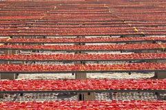 A superfície infinita surpreendente do arranjo do vermelho secou tomates Imagens de Stock Royalty Free