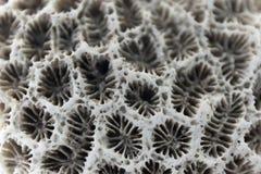 Superfície macro do coral Feche acima da textura do mar Fundo natural imagens de stock royalty free