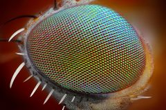 Olho macro da mosca   imagens de stock
