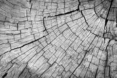 Superfície rachada cinzenta velha da madeira Imagens de Stock Royalty Free