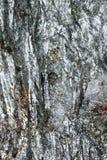 Superfície refletindo de mineral quebrado Fotos de Stock Royalty Free