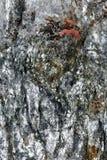 Superfície refletindo de mineral quebrado com inclusões vermelhas Imagem de Stock Royalty Free
