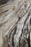 Superfície Textured de placas de madeira velhas imagens de stock