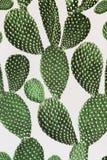 Superfície verde do cacto Papel de parede imagens de stock