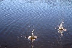 Superf?cie azul da ?gua do lago com ondinhas e artigo do espirro que cai nele ao refletir a luz solar imagens de stock royalty free