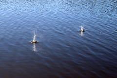 Superf?cie azul da ?gua do lago com ondinhas e artigo do espirro que cai nele ao refletir a luz solar fotos de stock