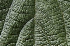 Superfície verde da folha Fotos de Stock