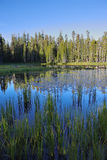 The superficial dark blue lake surrounded by pines Royalty Free Stock Images