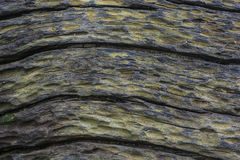 Superficial modelada de árboles muertos Fotografía de archivo
