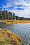 The superficial stream  in park Yellowstone Royalty Free Stock Images