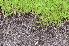Superficie áspera del asfalto Fotos de archivo