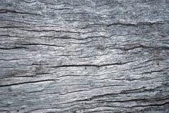 Superficie áspera del tronco de árbol fotos de archivo