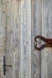 Superficie abstracta: fragmento de la puerta de madera vieja Fotografía de archivo libre de regalías