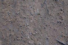 Superficie al suolo in una foresta Fotografia Stock