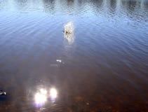 Superficie blu dell'acqua del lago con le ondulazioni e oggetto di spruzzatura che cade in mentre riflettendo la luce solare fotografia stock