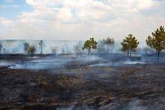 Superficie bruciata della terra dopo un incendio forestale immagini stock libere da diritti