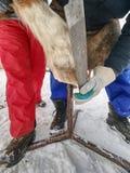 Superficie clara del herrador del horse& x27; enganche de s con la escofina áspera fotografía de archivo libre de regalías