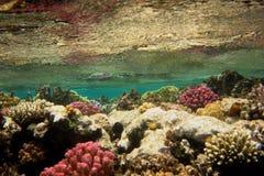 Superficie coralina colorida del agua Imágenes de archivo libres de regalías