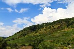 Superficie creciente de vino en Eifel Fotografía de archivo
