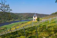 Superficie creciente de vino en el Elba en Sajonia fotografía de archivo