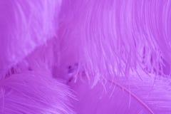 Superficie cubierta con las plumas púrpuras como composición de la textura del fondo Fotografía de archivo libre de regalías