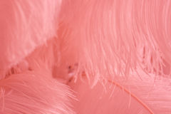 Superficie cubierta con las plumas rosadas como composición de la textura del fondo Fotos de archivo libres de regalías