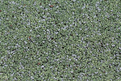 Superficie de goma suave verde Fotos de archivo