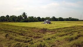 Superficie de la cantidad que sigue en granja del arroz en máquina segador almacen de video