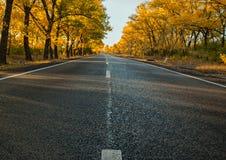 Superficie de la carretera por la tarde y los árboles del otoño imagen de archivo