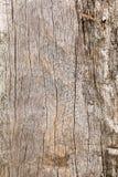 Superficie de la madera dura marrón Fotos de archivo