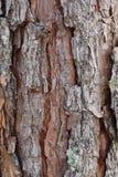 Superficie de la madera dura marrón Imagenes de archivo