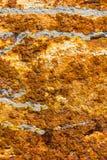 Superficie de la placa del moho del primer, textura del grunge foto de archivo