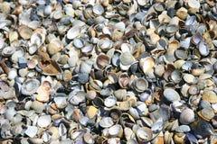 Superficie de la playa de la concha de berberecho Imágenes de archivo libres de regalías