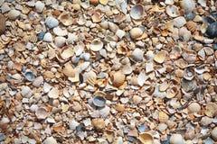 Superficie de la playa de la concha de berberecho Fotografía de archivo
