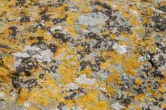 Superficie de la roca del mar con el primer de los liquenes foto de archivo