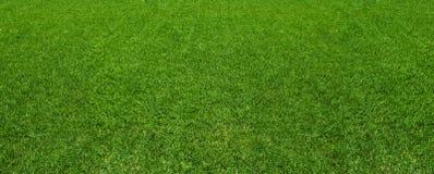 Superficie de la textura del fondo de la hierba verde imágenes de archivo libres de regalías