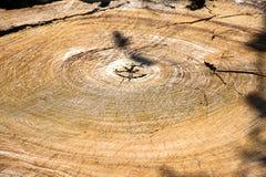 Superficie de madera del grano del fondo Fotos de archivo
