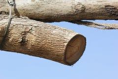 Superficie de madera del primer de la pila del registro Imagen de archivo libre de regalías