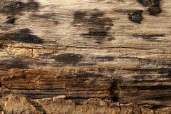 Superficie de madera quemada, texturizado y detallado Foto de archivo