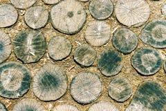 Superficie de partes de la textura de madera de los árboles, modelo natural, fondo Imagen de archivo libre de regalías