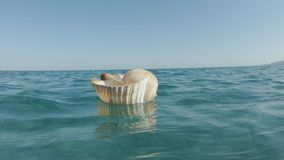 Superficie de Tun Shell Floating On The Sea del gigante almacen de metraje de vídeo