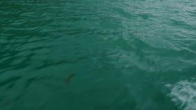 Superficie de un agua de color verde oscuro almacen de metraje de vídeo