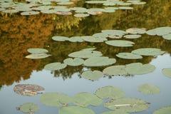 Superficie de un lago Imagenes de archivo
