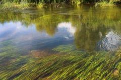 Superficie de un pequeño río foto de archivo libre de regalías