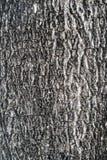 Superficie del árbol Imagen de archivo