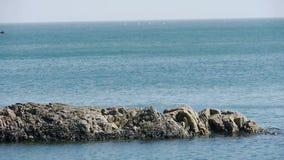 Superficie del agua del océano y filón costero, algas, alga marina, reflujo, horizonte, horizonte de la roca metrajes